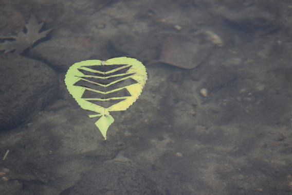 2013 #75 Leaves on Boise River