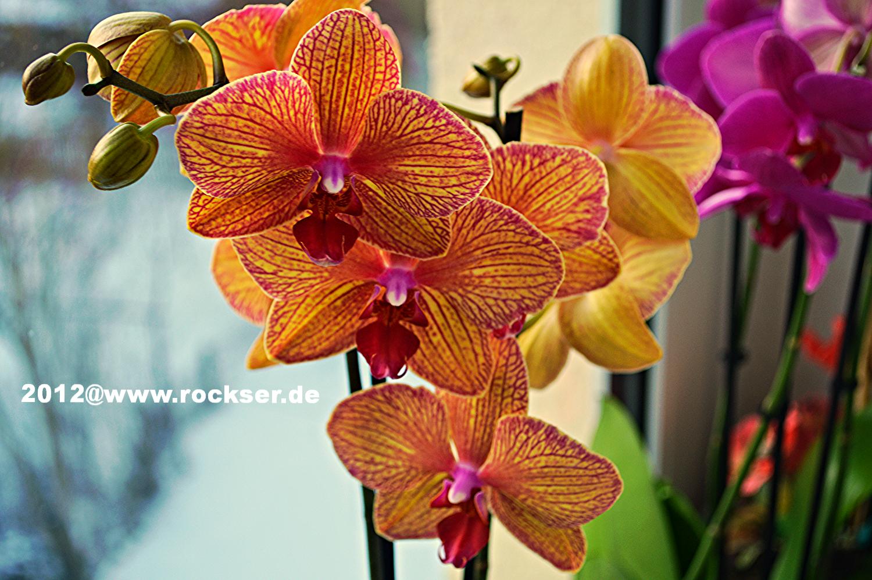 Orchideenzucht