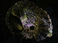 shell-3.jpg