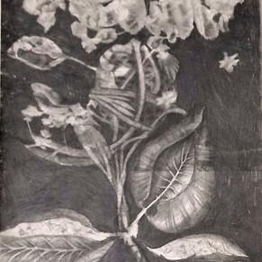Tegning på risografi