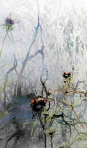 blomst-vinter-1.jpg