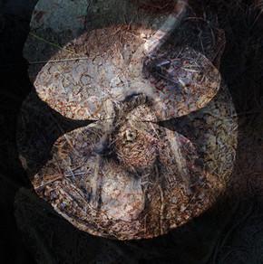 shell-4.jpg