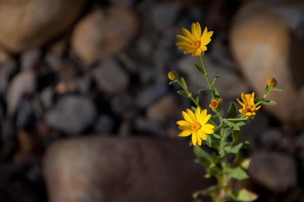 Flower-0838.jpg