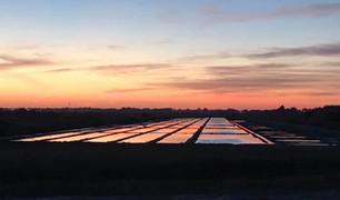 Couché de soleil sur les marais