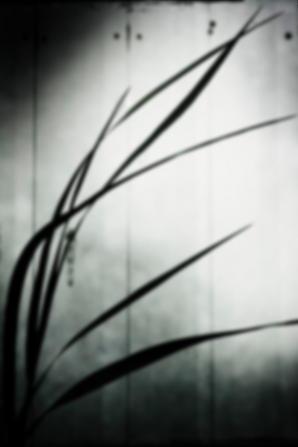 lior faust | ליאור פאוסט