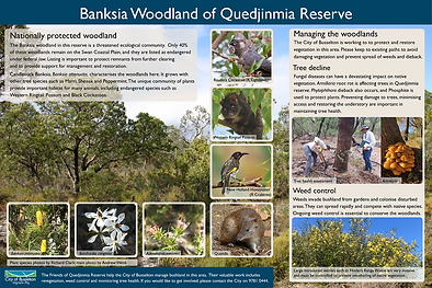 banksia woodlands.png