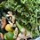 Thumbnail: 16oz. Jar of Green Juice