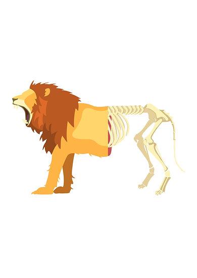 Lion Life Death