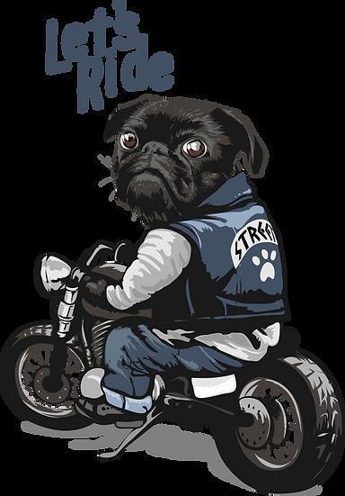 Dog 38