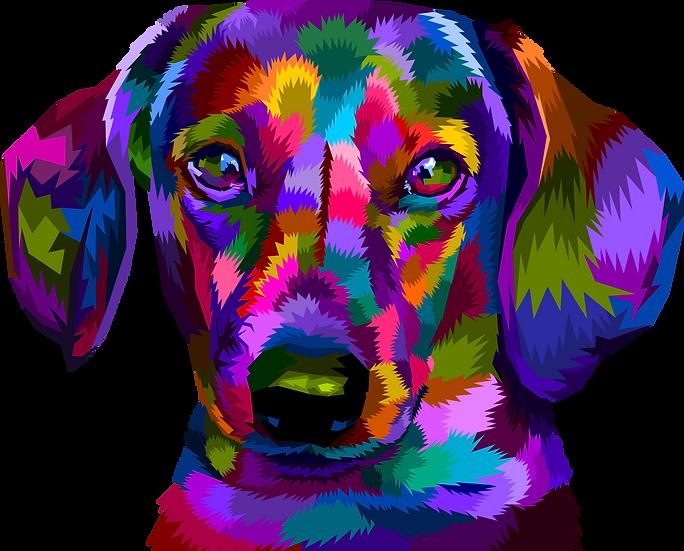 Dog 56
