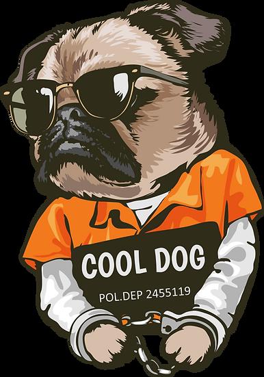 Dog 37