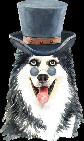 Dog 52