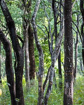tree_small.jpg