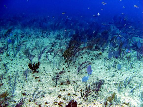 Le béton armé...désarme les animaux marins