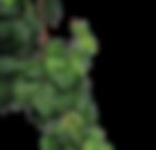 feuilles_png_2_modifié.png