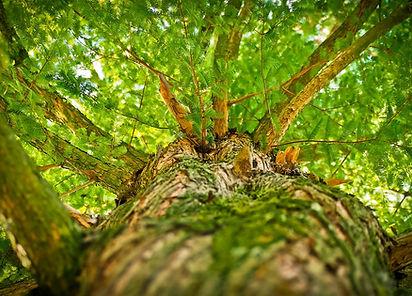 tree-1750784_1280.jpg
