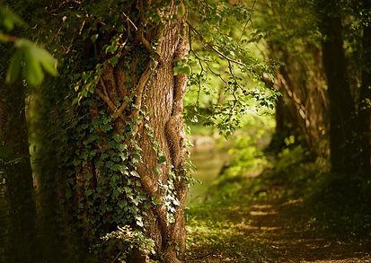 spring-5002186_1280.jpg
