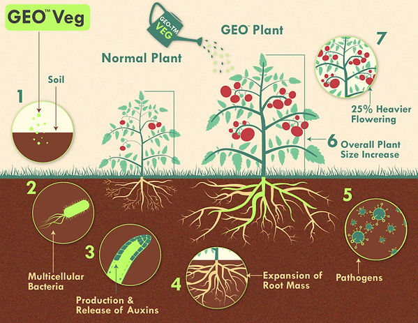geo-veg-product-infographic-by-ggta.jpg