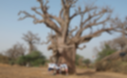 Équipe Baobab+