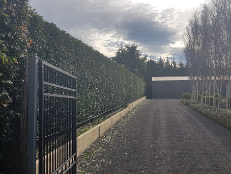 Hedge Trim
