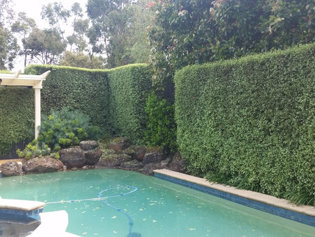 Hedge Trimming - Berwick