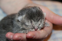 2020.3.11 grey kitten.jpg