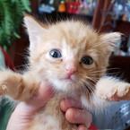 REbecca tan kitten.jpg