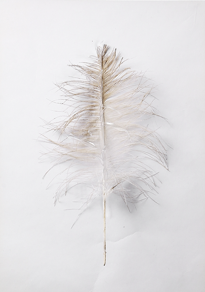 Plume Ange Transparence
