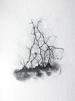 Rhizome 14