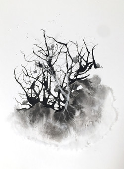 Rhizome 7