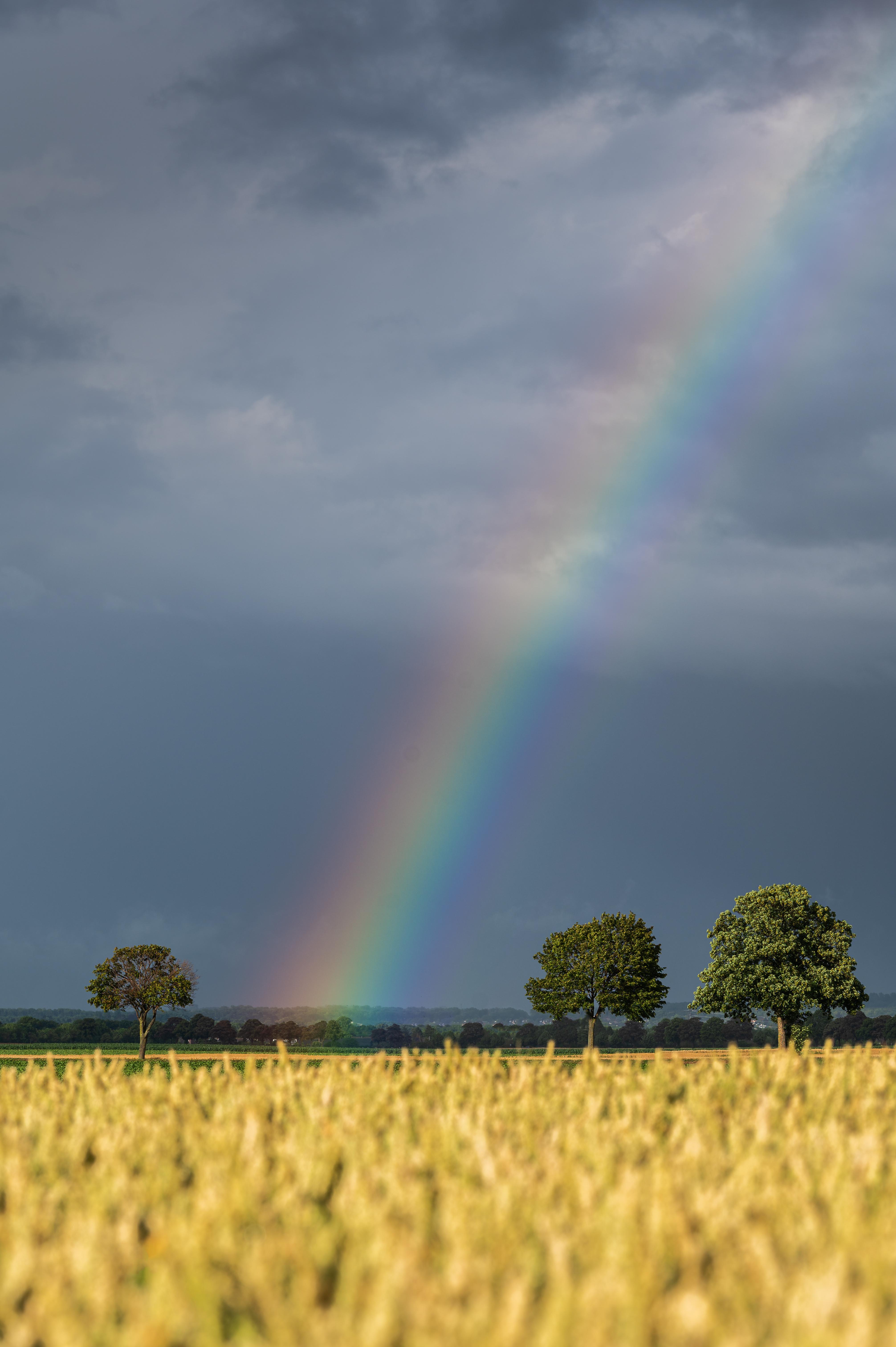 rainbow-love