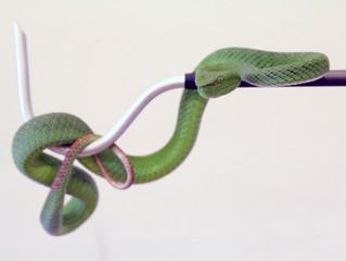 Mini Snake Hooks Now Available!
