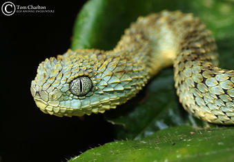 Reptile encounters for schools