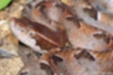Exotic animal camera work tv work wildlife music industry film documentary venomous snake animal lizard reptile
