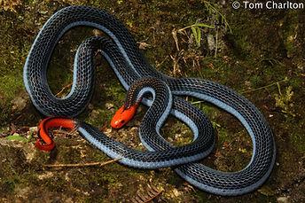 Educational talks training Tropics remote regions dangerous animals venomous reptiles snakes lizards crocodiles