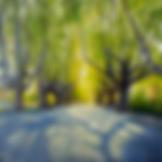 Screen Shot 2020-02-17 at 2.20.34 pm.png