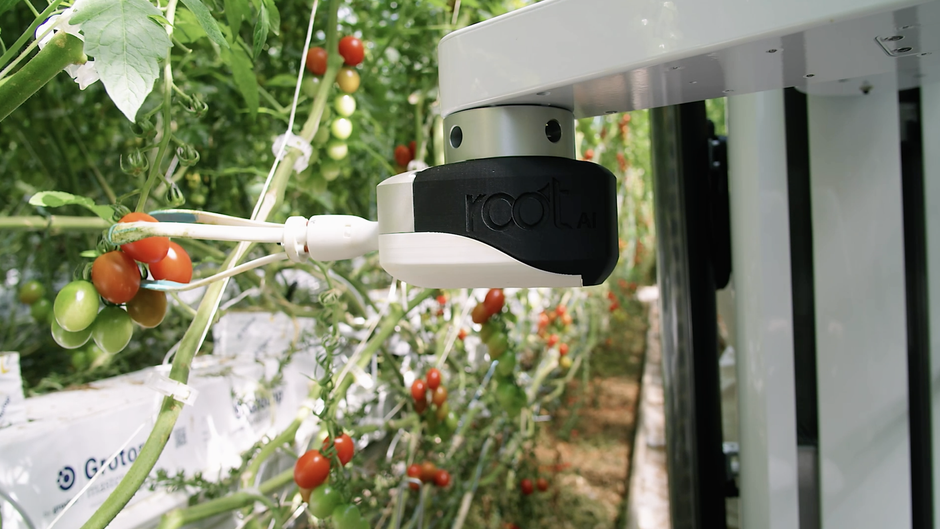 Farmers are using AI to spot pests and catch diseases