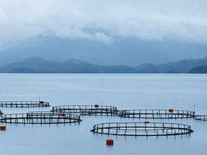 How machine learning is helping take waste out of aquaculture