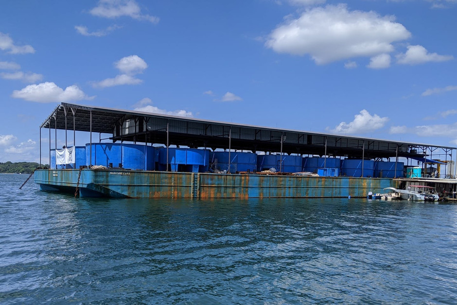 Fish farms turn to AI, recirculating systems to scale up sustainable aquaculture