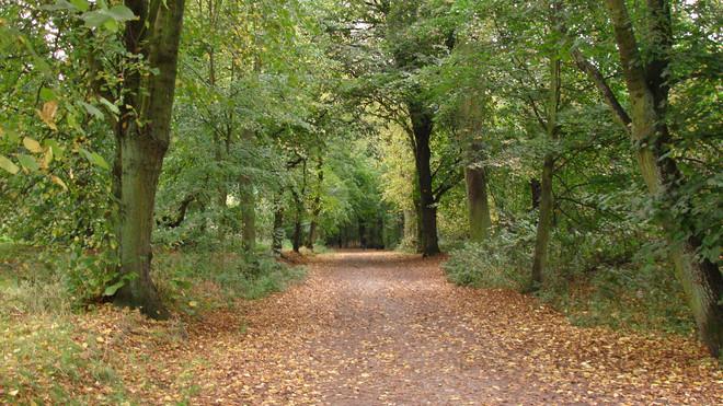 Hampstead Heath.JPG