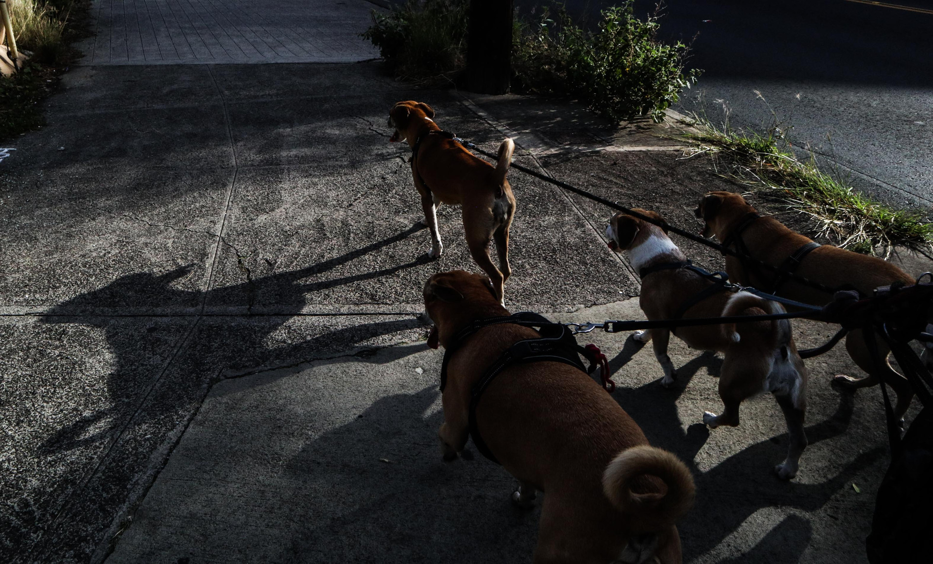 """""""I have loved these dogs more than I have ever loved a person,"""" says Dornfried as he reminisce on one of his former dogs who he lost from a car accident."""