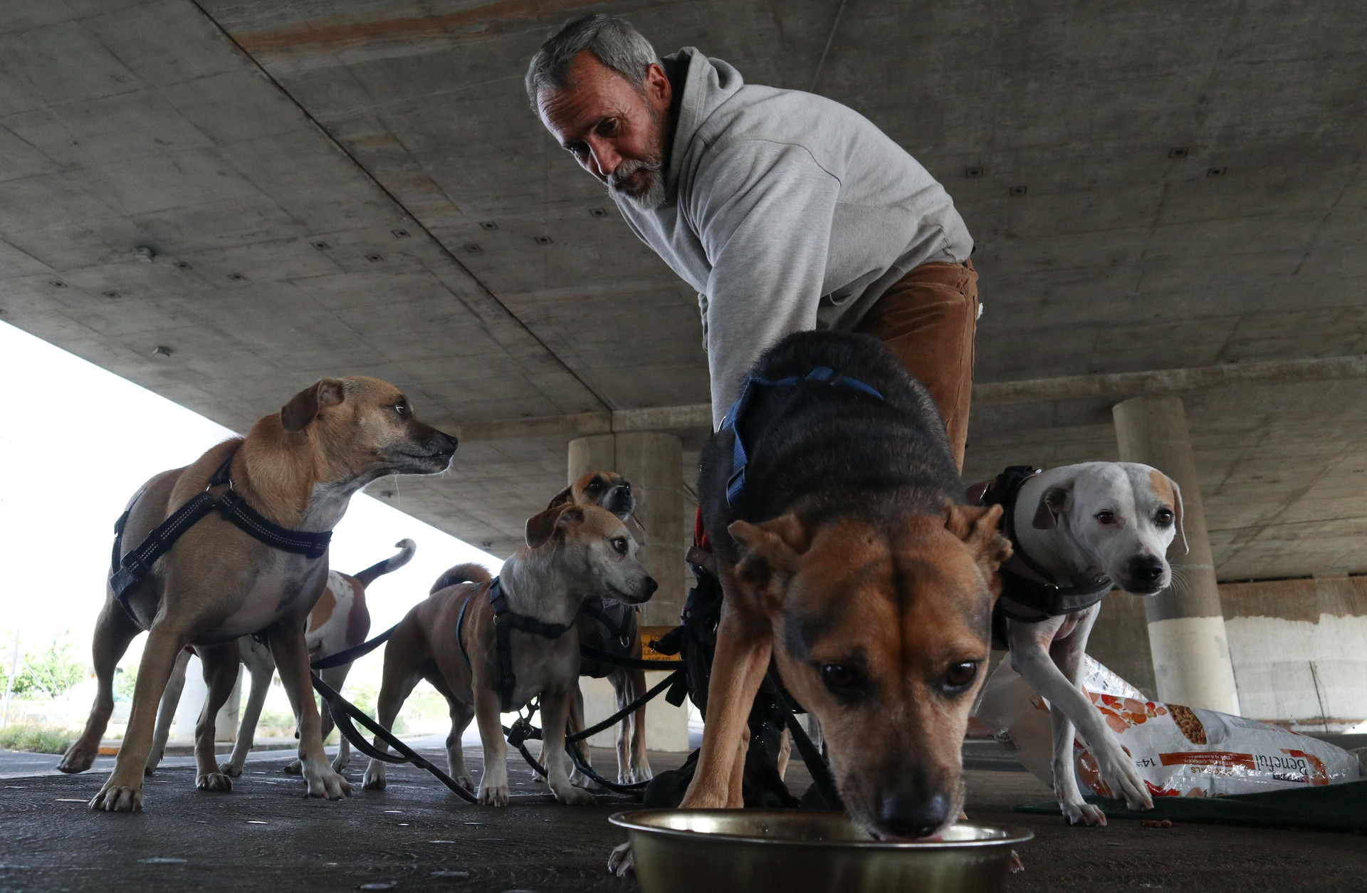 His seven dogs remains a part of his reason to stay on the street and not having a job to pay his rent. No homeless shelter want to take him because of his dogs.