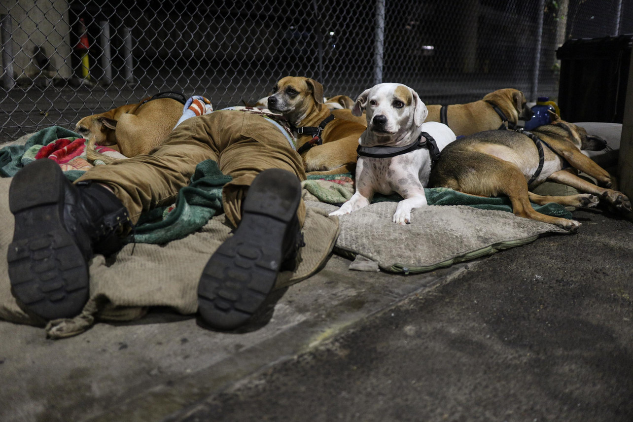 """His dogs guard him when he sleeps on the sidewalks of Kapiolani Blvd. He says """"My dogs can even kill if anyone attacks me."""""""