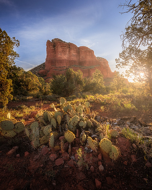First light spilling over a cactus patch on a perfect morning in Sedona, Arizona.