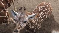 Abilene Zoo, Texas