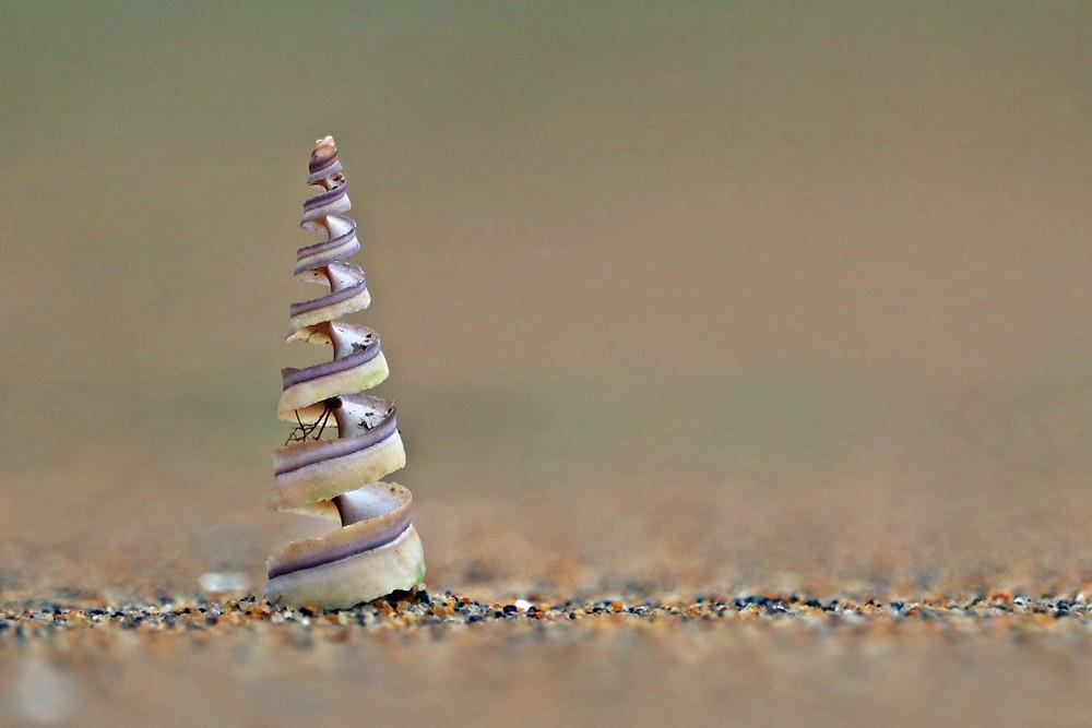 """Coastal Christmas Tree"" by Tanya Rowe"