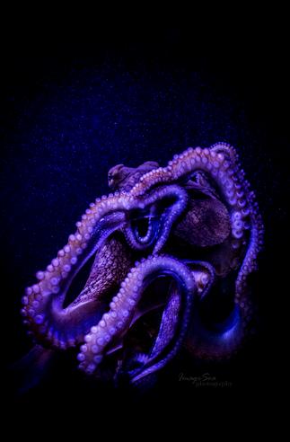 Octopus by Katrina Weir