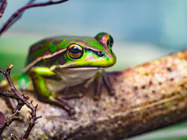 Mr. Froggington by Damon Marshall