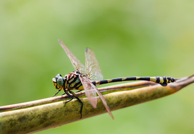 Dragonfly by Vicki Finlay