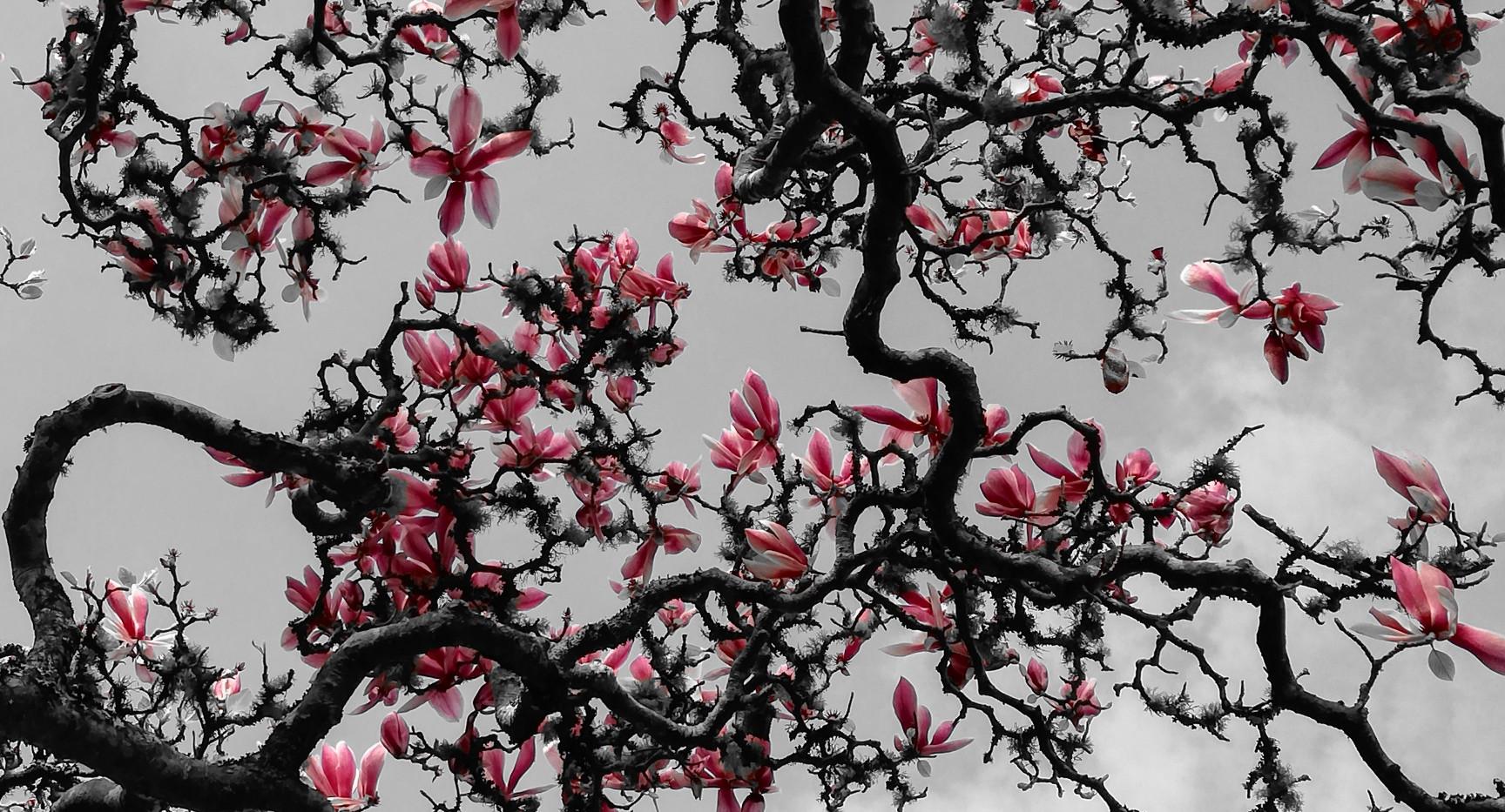 Magnolia by Ginny MccMcCa